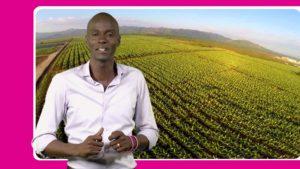 Le nouveau président Tèt Kale, Jovenel Moise, « l'homme-banane », suit la trace de son tuteur, Michel Martelly, le «musicien» débridé, qui a tout fait, au cours de son mandat, pour ouvrir le pays au pillage systématique de ses ressources.